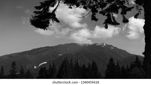 Mountain peaks in bright sunlight. Fir tree silhouette in the foreground.