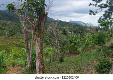 mountain peaks forests and valleys along cordillera central in jayuya puerto rico