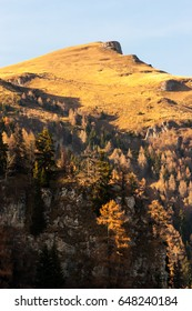Mountain peaks in a warm bright sunlight.Fir trees downwards.