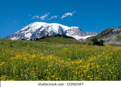 Mountain Rainier, Paradise Valley, meadows in blossom