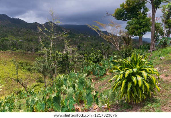 mountain range of cordillera central under storm clouds and sunny hillside overlooking valley in jayuya puerto rico