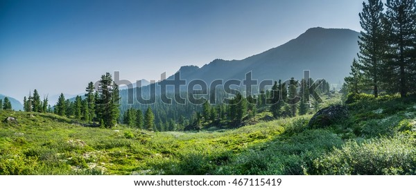 mountain-range-evergreen-trees-chamardab