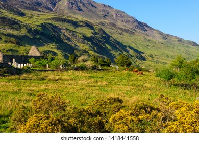 Mountain ranges and Highland cows make the landscape of the Isle of Skye in Scotland.