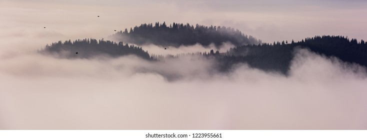 Mountain ridge with clouds flowing through the pine trees. Foggy Landscape.