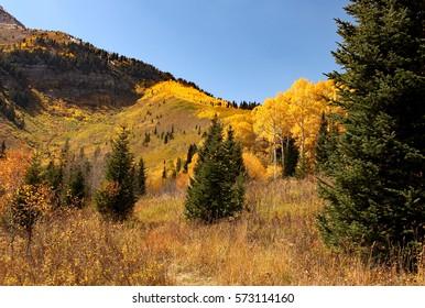 Mountain ridge line with golden Aspen trees.