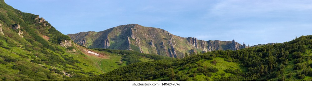 Mountain ridge with rocky outcrops. Panoramic view from slope partly covered with dwarf mountain pine thicket on foreground in summer morning.  Carpathian Mountains
