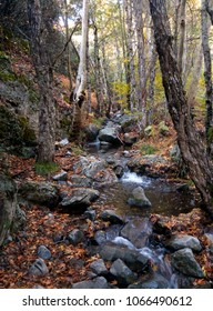 mountain river in the autumn forest, boulders and fallen leaves.