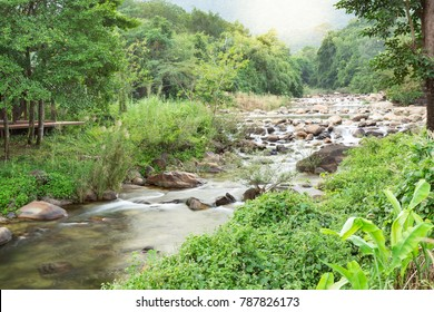 Mountain river in the background of the green forest.