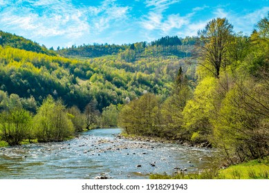 mountain river flows near the forest and mountains on a bright day. Spring season.