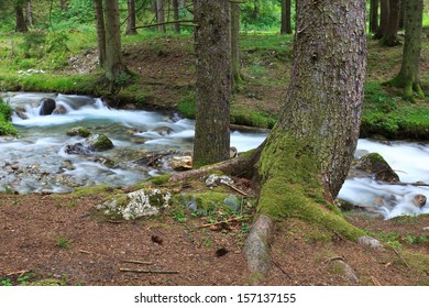 mountain river in a forest of trees