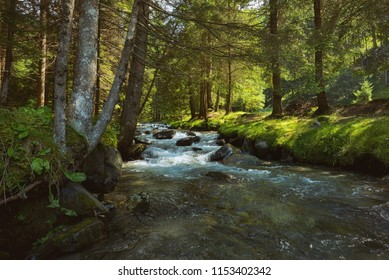 The mountain river in the romanian forest