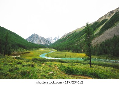 Mountain river of serpentine shape in valley against snowy mountains. Water stream in brook against glacier. Rich vegetation and forest of highlands. Amazing atmospheric landscape of majestic nature.
