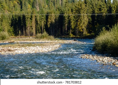 mountain river in summer with stream and high water in forest. Bialka river, Poland