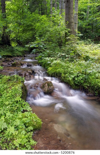 Mountain river trough the forest