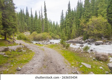 Mountain road in the forest