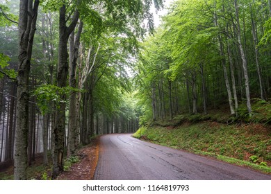 mountain road with forest on both sides