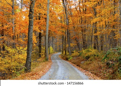 Mountain Road Through Fall Colors