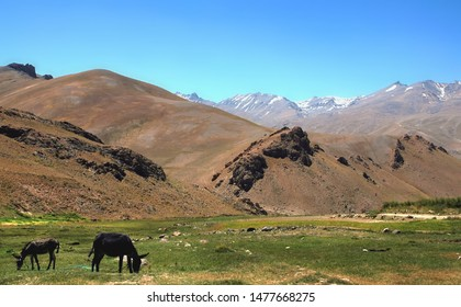Mountain scenery between Kabul and Bamyan (Bamiyan) in Afghanistan. Donkeys graze in a grass field. Taken from the road on the southern route between Kabul and Bamyan (Bamiyan) in central Afghanistan.