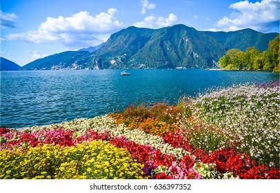 Mountain sea. Mountain flowers landscape