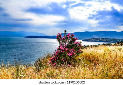 Mountain sea shore flower bush landscape. Sea flower bush panorama. Mountain sea bay flower bush view. Mountain sea bay shore flower bush scene
