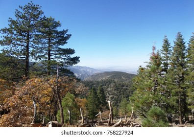 Mountain side with pines and black oaks with autumn colors, California
