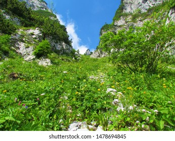 Mountain slope full of blooming wildflowers, lush grass and bush vegetation surrounded by rockwalls on both sides and clear blue sky in the back under Crna Prst in Julian alps in Slovenia - Shutterstock ID 1478694845