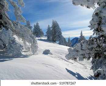 Mountain and snowy forest. Pyrenees. Lerida, Spain