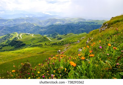 Mountain spring valley flowers landscape