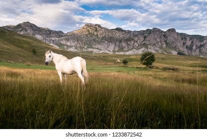 Mountain `Stozac` near Kapetanovo lake , Montenegro.  View to mountain `stozac` , Montenegro