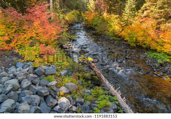 Mountain Stream in Beautiful Autumn, Fall in Red, Yellow ,Orange and Green Colors.