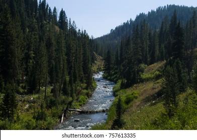 Mountain stream in the Bridger-Teton National Forest, Wyoming USA