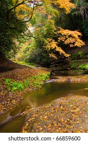 Mountain stream and fallen leaf