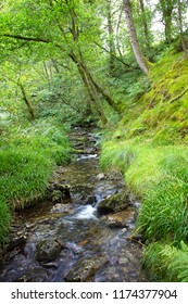 Mountain stream flowing down through Sallochy Wood on the banks of Loch Lomond, Scotland, UK.