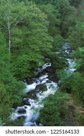 Mountain stream of fresh green