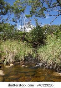 Mountain stream, Kauai, Hawaii