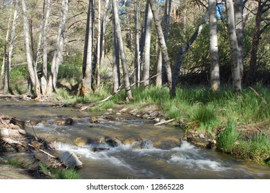Mountain stream in late afternoon light; San Bernardino, California
