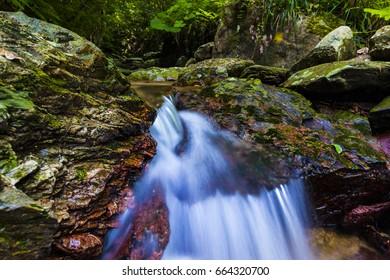 Mountain stream, moss, landscape. Okinawa, Japan, Asia.