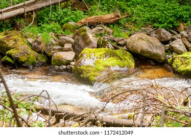 Mountain stream with stones covered with moss and green grass. Beautiful views in the Polish Tatras.