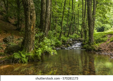 Mountain stream surrounded by alders. Ukraine - Transcarpathia.