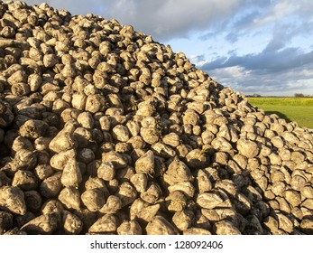 mountain of sugar beets