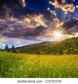 mountain summer landscape. pine trees and rainbow near meadow and forest on hillside under  evening sky with clouds