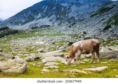 Mountain summits under clouds with cows, Retezat mountain, Romania