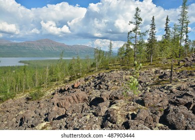 Mountain taiga on the Putorana plateau. Siberian taiga landscape on a summer day.