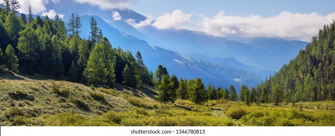 Mountain taiga, summer landscape