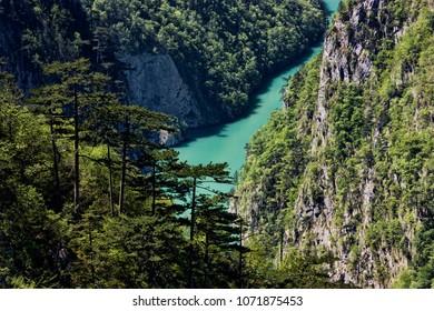 Mountain Tara, Serbia