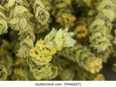 Mountain tea Malotira, background. Greek traditional herbs. Herbal tea. Blured herbs.
