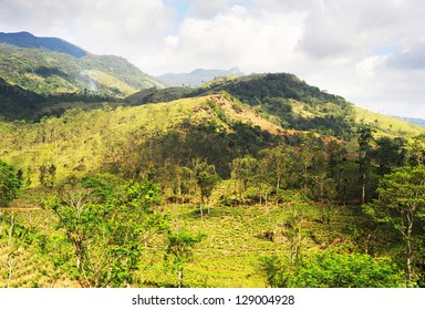 Mountain and tea plantation on it. Sri Lanka