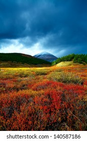 mountain top in a taiga with a red bush