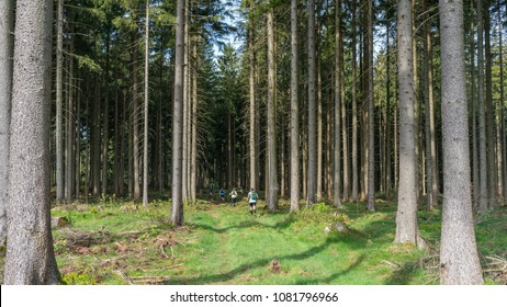 Mountain trailrunning through a forest