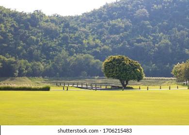 Mountain tree meadow Summer mountain landscape Beautiful view